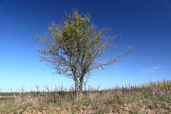 Pojedynczy drzewo przy stroną osamotniona żwir droga Fotografia Royalty Free