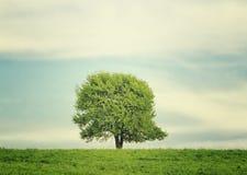 Pojedynczy drzewo w centre łąka w lato krajobrazie pod niebieskim niebem z chmurami Zdjęcie Royalty Free