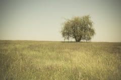 Pojedynczy drzewo w otwartej trawiastej śródpolnej łące Zdjęcie Royalty Free