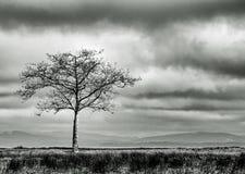 Pojedynczy drzewo w polu z Burzowym niebem w Czarny I Biały Zdjęcie Royalty Free