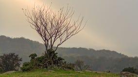 Pojedynczy drzewo w promieniu światło Zdjęcie Stock