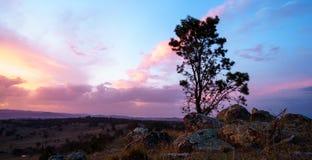 Pojedynczy drzewo w pustyni z pięknym chmurnym niebem w tle przy zmierzchem zdjęcie royalty free
