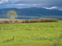 Pojedynczy drzewo w Zielonym paśniku z górami w odległości zdjęcie stock