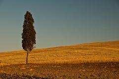 Pojedynczy drzewo z niebieskim niebem Zdjęcie Royalty Free