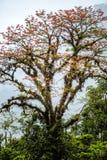Pojedynczy drzewo z zielonym mech Fotografia Stock