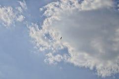Pojedynczy dziki ptak w niebie z chmurami Zdjęcie Royalty Free