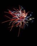 Pojedynczy fajerwerk w Moore, OK Zdjęcia Royalty Free