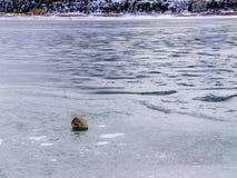 Pojedynczy głaz na powierzchni Zamarznięty jezioro Zdjęcie Royalty Free