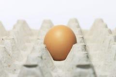 Pojedynczy jajko na tacy Fotografia Stock