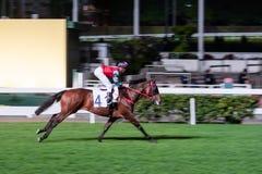 Pojedynczy koń jadący dżokejem Noc wyścigi konny rywalizacja przy biegowym kursem Zamazany ruch, horyzontalny wizerunek Obraz Stock