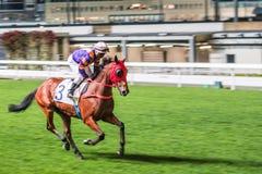 Pojedynczy koń jadący dżokejem Noc wyścigi konny rywalizacja przy biegowym kursem Zamazany ruch, horyzontalny wizerunek Obraz Royalty Free