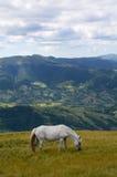 Pojedynczy koń w górach Zdjęcia Royalty Free