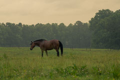 Pojedynczy koń w polu pod deszczem Fotografia Royalty Free