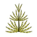 Pojedynczy koloru żółtego i zieleni horsetail Fotografia Royalty Free