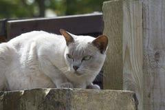 Pojedynczy kot Zdjęcie Royalty Free