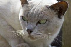 Pojedynczy kot Obrazy Royalty Free