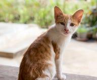 Pojedynczy kot na stary drewnianym Zdjęcia Royalty Free