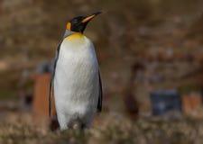 Pojedynczy królewiątko pingwin z profilem dobro Zdjęcia Royalty Free