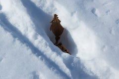 Pojedynczy liść na śniegu Zdjęcia Royalty Free