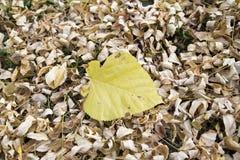 Pojedynczy liść na liściach Zdjęcia Royalty Free
