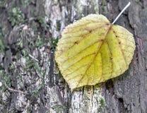 Pojedynczy liść spadać od drzewa na barkentyny drzewny, pokojowy i nieznacznie surrealistyczny wrażenie, zdjęcie royalty free