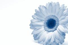 pojedynczy makro białe kwiaty Obrazy Royalty Free