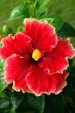 Pojedynczy Makro- kwiat z naturalnym tłem Obrazy Stock
