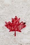 Pojedynczy malujący czerwonego klonu urlop Fotografia Stock
