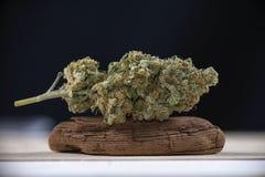 Pojedynczy marihuana pączka mangolope marihuany napięcie na ciemnym backgro fotografia royalty free