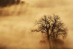 pojedynczy mgły drzewo Obrazy Stock