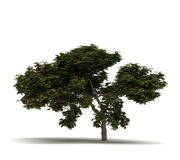 Pojedynczy płomienia drzewo ilustracja wektor