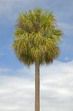 pojedynczy palmy drzewo Obrazy Royalty Free