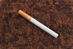 Pojedynczy papieros na tbacco tekstury tle Zdjęcia Stock