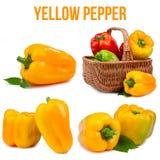 pojedynczy pepper Obraz Stock