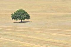 pojedynczy pola drzewo Obrazy Stock