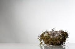 Pojedynczy ptaka gniazdeczko Obrazy Stock