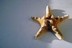 pojedynczy rozgwiazdę tło białe Zamyka w górę fotografii zdjęcie stock