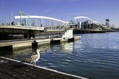Pojedynczy seagull blisko Rambla De Mącący mosta w Barcelona porcie Obraz Stock