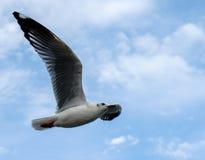 Pojedynczy seagull latanie w niebie jako tło przy Bangpoo zdjęcie royalty free
