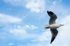 Pojedynczy seagull latanie w niebie jako tło przy Bangpoo zdjęcia stock