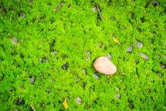 Pojedynczy suszy urlop spadać na zielonym mechatym tle Sztuka natura Zdjęcie Royalty Free