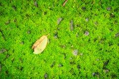 Pojedynczy suszy urlop spadać na zielonym mechatym tle Sztuka natura Zdjęcia Royalty Free
