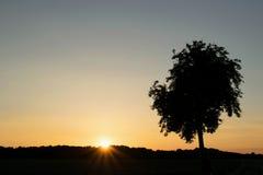 Pojedynczy sylwetki drzewo z zmierzchu tłem Zdjęcie Royalty Free
