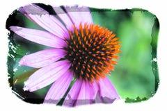 Pojedynczy szyszkowy kwiat czarny i biały Zdjęcie Stock