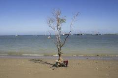 pojedynczy trew w plaży z jasnym niebieskie niebo widoku tłem Fotografia Royalty Free