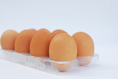 pojedynczy white jajko Obraz Stock
