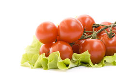 pojedynczy white pomidorowego Zdjęcie Royalty Free