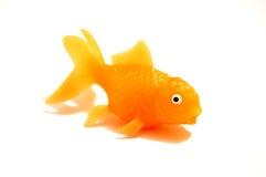 pojedynczy white złotą rybkę Zdjęcie Stock