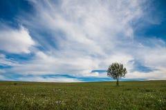 Pojedynczy ypung drzewo na zieleni polu, różowa jesień kwitnie na przedpolu obrazy stock