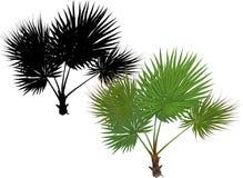 Pojedynczy zielony drzewko palmowe z wielkimi liśćmi royalty ilustracja
